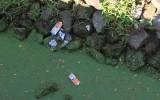 Rattenplaag door vervuilde Regge