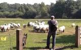 Lammetjesdag, adopteer uw eigen lam