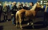 Vanaf volgend jaar geen paardenhandel meer tijdens de Paardenmarkt
