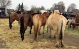 Paardenmarkt, kerstbeurs en muziek