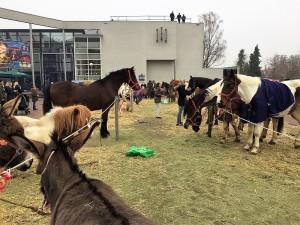 paardenmarkt13