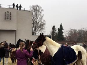 paardenmarkt14