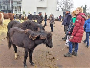 paardenmarkt16