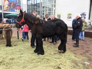 paardenmarkt17