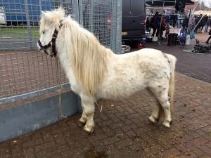 paardenmarkt2
