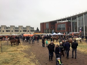 paardenmarkt3
