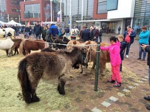 paardenmarkt5
