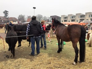 paardenmarkt7