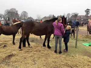 paardenmarkt9