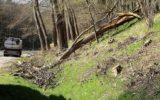 Brandweer rukt uit voor omgevallen boom