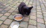 Klein katje geniet van gastvrijheid op De Hogenkamp (update)