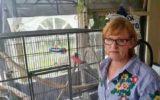 Goorse voert juridisch gevecht om in beslag genomen papegaai