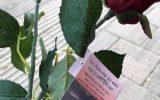 Ik geef je een roosje, mijn roosje…