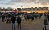Al vroeg druk op Goorse paardenmarkt