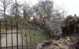 Code Rood: Ontwortelde boom zorgt voor ravage op begraafplaats