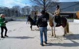 Pony's op het beachveld…
