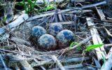 Groene loper zoekt lentefotografen