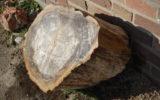 Versteende boomstam voor even in Goor