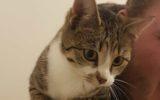 Katje aan komen lopen Da Costastraat (Update)