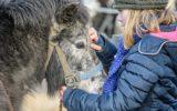 Goorse paardenmarkt nog springlevend