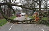 Grote tak blokkeerde weg Goor-Enter
