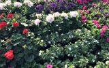 Plantjesactie Dynamiek