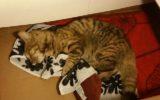 Gewonde kat gevonden Laarstraat / Blauwververij