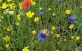 GroenLinks wil verhoging toeristenbelasting voor biodiversiteit