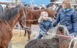 Meerderheid voor verhuizing paardenmarkt, één-derde anti
