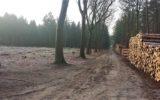 Ergernis over bomenkap Weldam