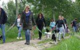 Gemeente vraagt om honden aangelijnd te houden om koeienziekte te voorkomen