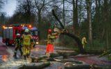 Omgewaaide boom blokkeerde Diepenheimseweg