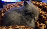 Konijn Snoes vermist in de Catsstraat