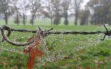 Zo mooi is de Goorse herfst… (8)