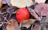 Zo mooi is de Goorse herfst…(9)