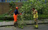 Brandweer ruimt omgewaaide boom
