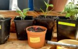 Plantjesbieb wordt komende zaterdag geopend