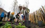 Groene loper krijgt subsidie voor eetbaar groen